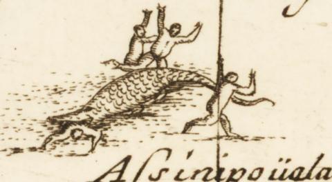 Alligator in Canada by Coronelli, 1695